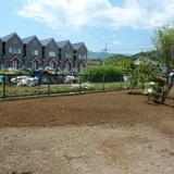 植木と庭石の撤去