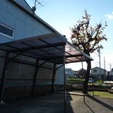 柿の木の剪定とカーポート修理