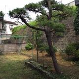 植木の伐採、草刈り