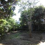 庭木の剪定、枝落し