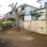 庭木の伐採と剪定