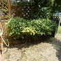 花壇の解体・レンガの回収-AFTER02