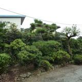 庭木の伐採・剪定工事