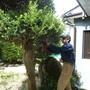 庭木の伐採、剪定-BEFORE04