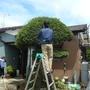 庭木の伐採、剪定-AFTER02