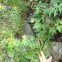 庭石の撤去処分-BEFORE02