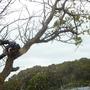 植木の伐採作業-BEFORE03
