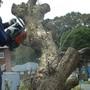 植木の伐採作業-AFTER02