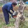 植木の伐採作業-AFTER03