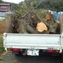 植木の伐採作業-AFTER04