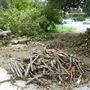 大木の伐採作業-BEFORE04