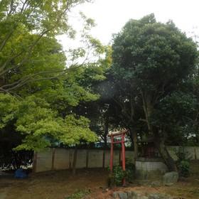 大木の伐採作業-AFTER01