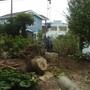 大木の伐採作業-AFTER03