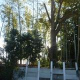 竹林の伐採、間引き