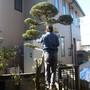 庭木の伐採-BEFORE02