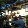 庭木の伐採-BEFORE03