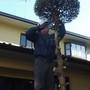 庭木の伐採-BEFORE04