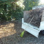 枯れ枝と倒木の処分-BEFORE02