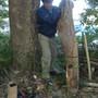 枯れ枝と倒木の処分-BEFORE04