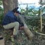 枯れ枝と倒木の処分-AFTER02
