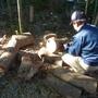 枯れ枝と倒木の処分-AFTER03