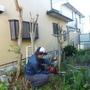 庭木の伐採、伐根-AFTER02