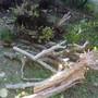 庭木の伐採、伐根-AFTER04