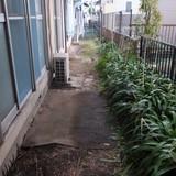 庭木、植木鉢等の撤去