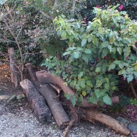 生木の回収-BEFORE01