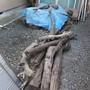 生木の回収-BEFORE02