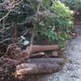 生木の回収-BEFORE03