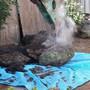 庭石の撤去処分-AFTER02