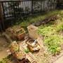 庭回りの片付け-BEFORE02