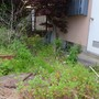 庭回りの片付け-BEFORE03