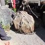 庭石の撤去-BEFORE03