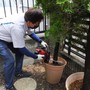 庭木の撤去-BEFORE03