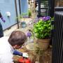 庭木の撤去-BEFORE04