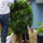 庭木の撤去-AFTER02